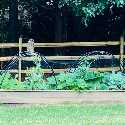 Matilda and Frankie spotted an owl guarding their garden on the adventure challenge!