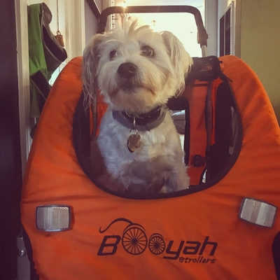 Puppy in Booyahs Medium Pet Dog Stroller