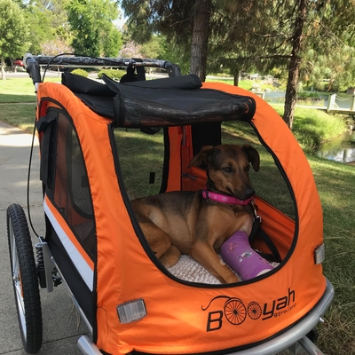 Broken arm dog in Booyah Strollers Large Orange Stroller