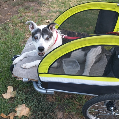 Nicki 13 years old enjoying a walk in her stroller